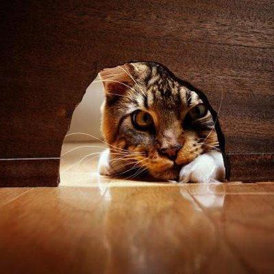 Gato mirando a través de agujero