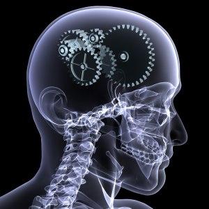 engranajes dentro de un cráneo